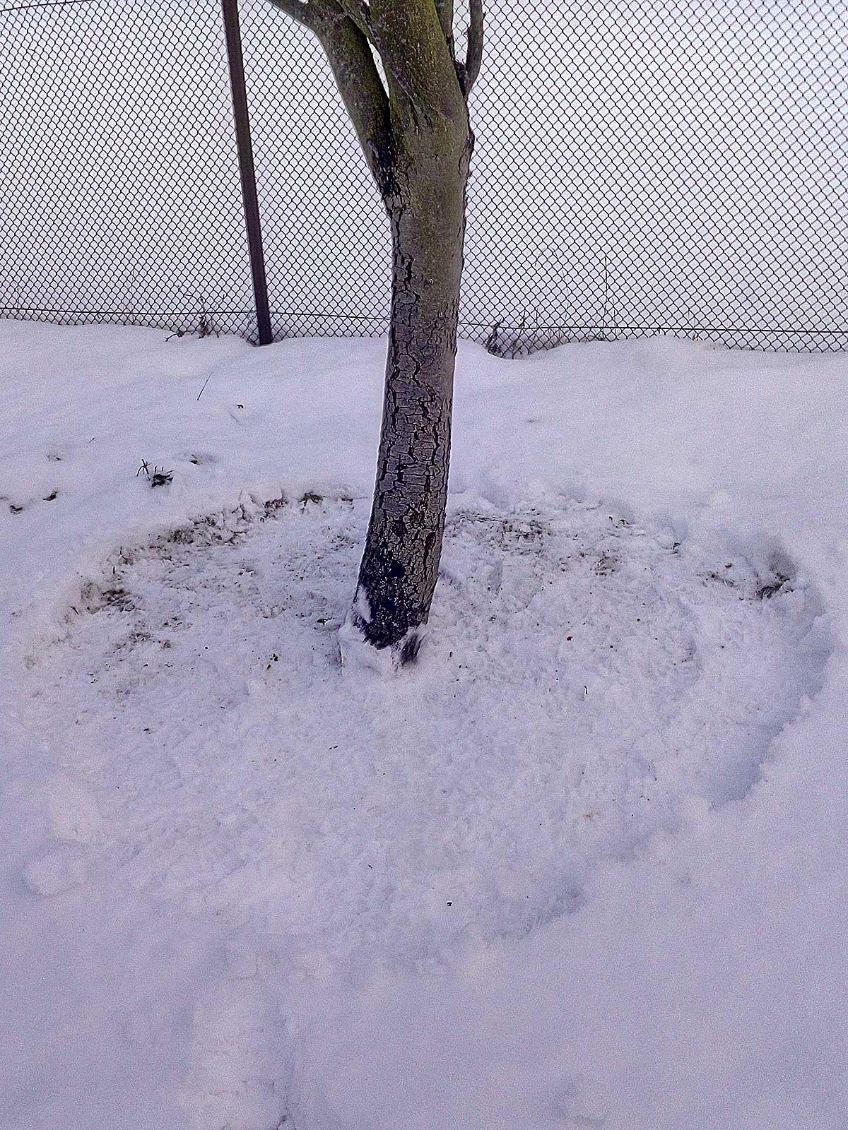 Aptryptas sniegas