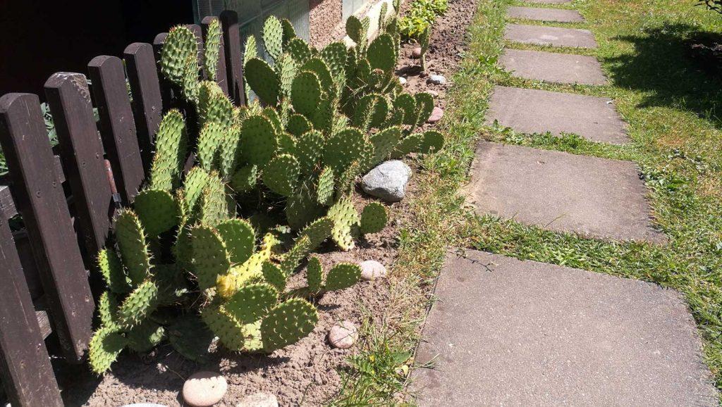 """Ir kaktusai čia auga – SB """"Kanklės"""""""