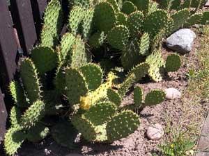 """[prezentacija] Ir kaktusai čia auga – SB """"Kanklės"""""""